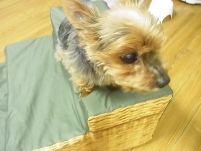 i犬用階段 ペットスロープ