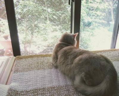 DMC コットン バスマット ラグマット 猫マット