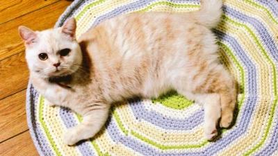 DMC コットン ナチュラ XL  バスマット ラグマット 猫マット