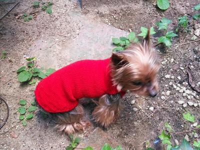 小型犬 手編みセーター カシミア