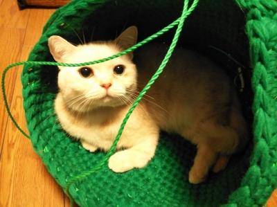 手編み 猫ハウス ドーム型 猫ちぐら 猫つぐら 手作り 手づくり