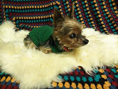ムートン ハギレセット ムートン&インテリア ノーブル 猫 犬 マット