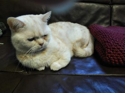 ひざ掛け Ravelry  Diagonal Comfort Blanket
