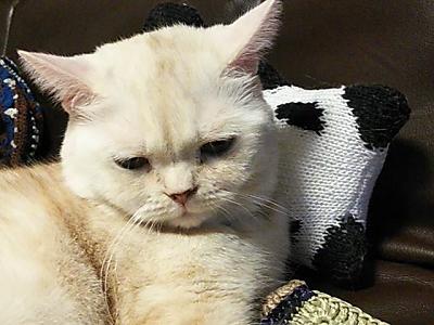 毛糸だま 2018年 春号 vol.177  ラ・ドログリー パンダちゃん 編みぐるみ あみぐるみ