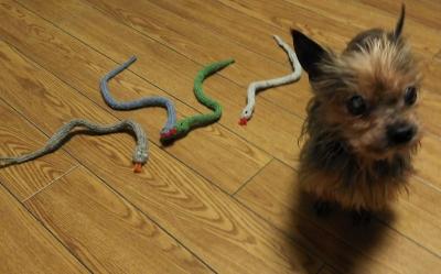 猫あそび手芸 [ サラ・エリザベス・ケルナー ]」 猫 おもちゃ 手づくり ハンドメイド