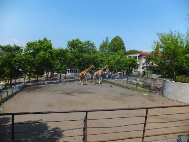 2012-06-10_4463.JPG