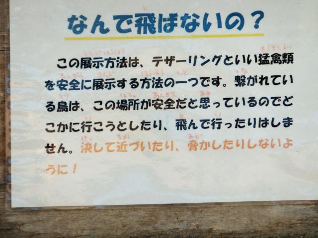 2012-06-10_4522.JPG