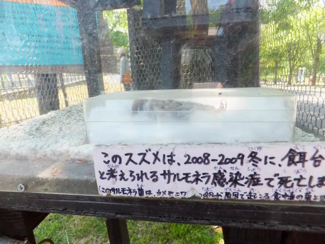 2012-06-10_4501.JPG