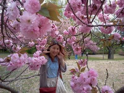 くりから峠の山桜.jpg