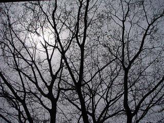 田原駅近く、木の枝から見える太陽