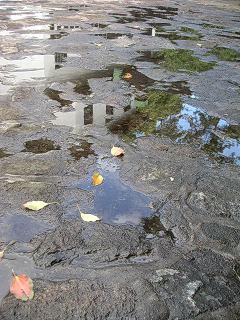 水たまりに落葉