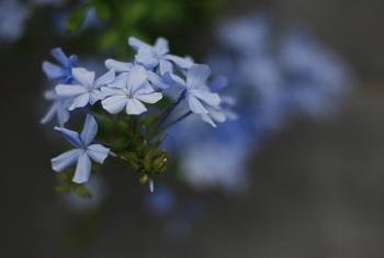 夏の夕暮れに路地で見た花