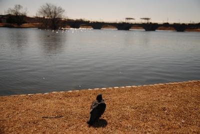 豊橋 幸公園の鳩