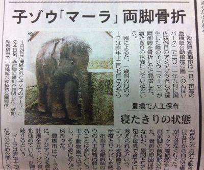 子ゾウのマーラ骨折