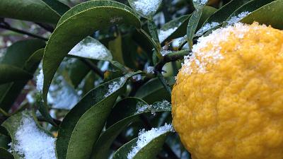 2015年元旦の雪