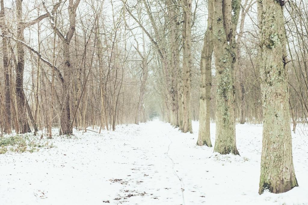 Photographer荒木勇人がパリにて撮影したブローニュの森の写真