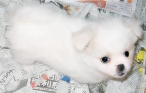 ペット/犬