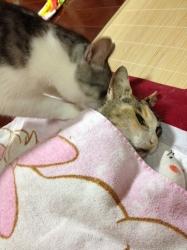 2012.7.17お別れの日