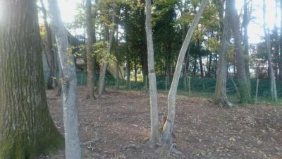 鬼怒川絆の屋外にある森のドッグランの画像