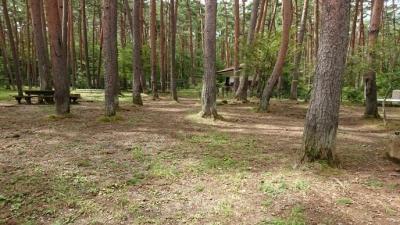富士すばるランドの森のドッグランの写真