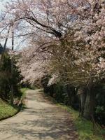 2010黒沢牧場桜