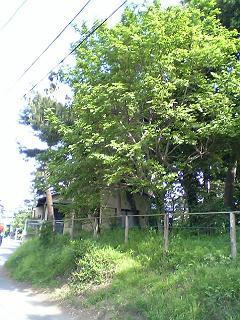 鵠沼海岸〜松が岡1