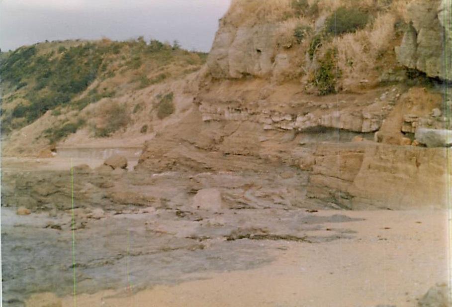 1982年頃の奈多〜三苫海岸の地層