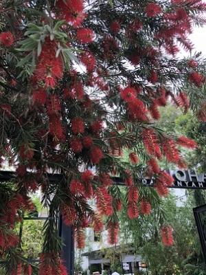 TENOHA代官山の前の謎の植物