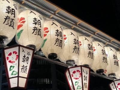 入谷朝顔市の提灯