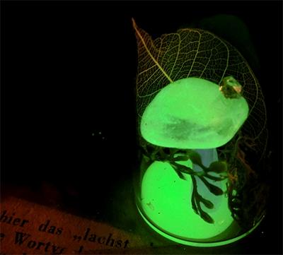光るキノコ標本 II