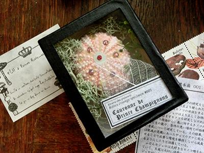 不思議な標本箱001/キノコ王子の冠
