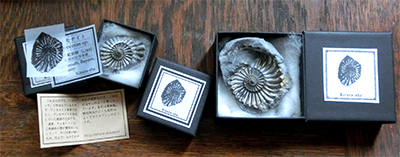 アンモナイト ネガティヴ化石