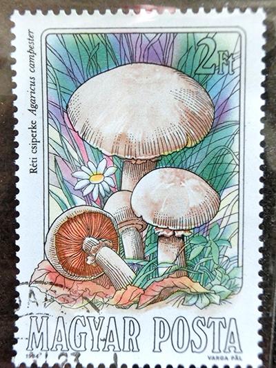きらら舎切手