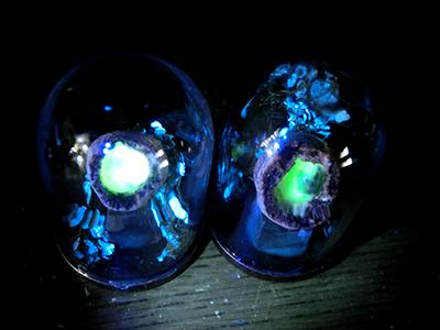 硝子ドーム標本/光る卵