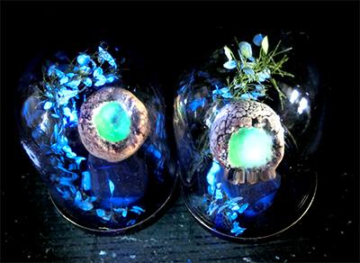 硝子ドーム標本/光る卵2