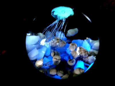 光る海月標本/青い蛍石
