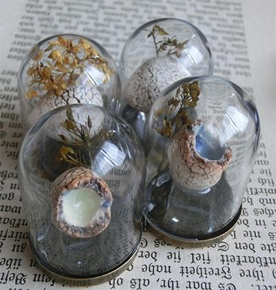 硝子ドーム標本/卵殻