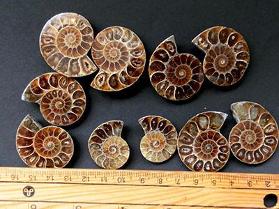 アンモナイト化石(スライス)