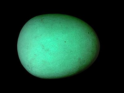 光る卵/きらら舎
