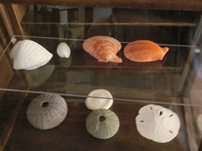 海辺の標本店のショーケース
