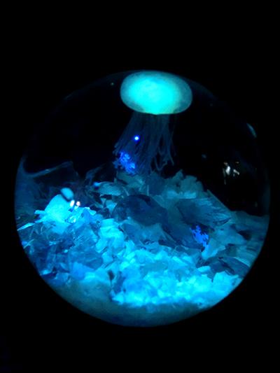 海月ドーム/きらら舎
