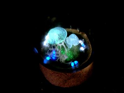 ミニ硝子グローブ標本/光るキノコ