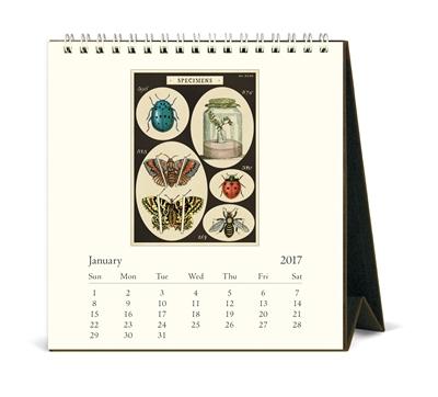 卓上カレンダー/きらら舎