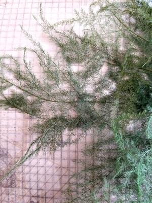 オイル液浸標本(ハーバリウム)/きらら舎