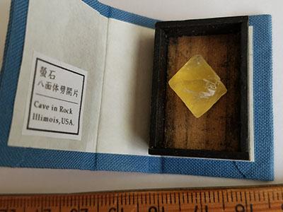 特別豆標本ブック/きらら舎