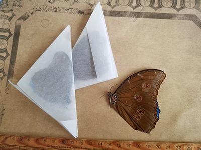 モルフォ蝶/きらら舎