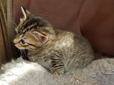 仔猫/きらら舎