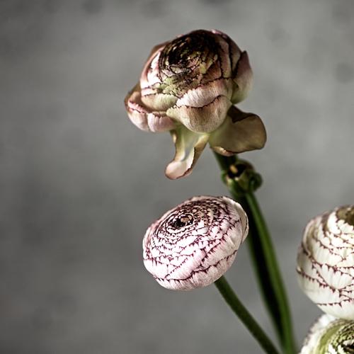 flower201603