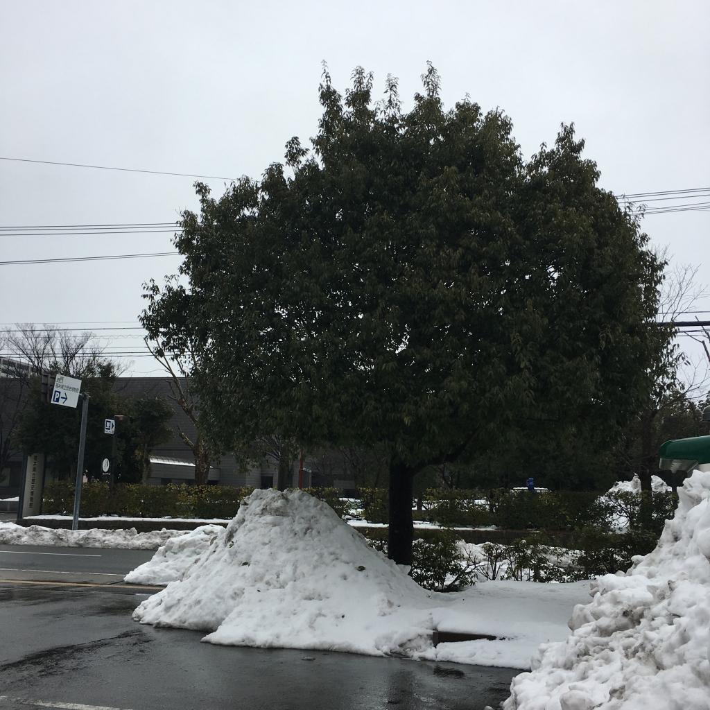 20180203豪雪前