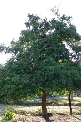 木の上の少年、見えますか?